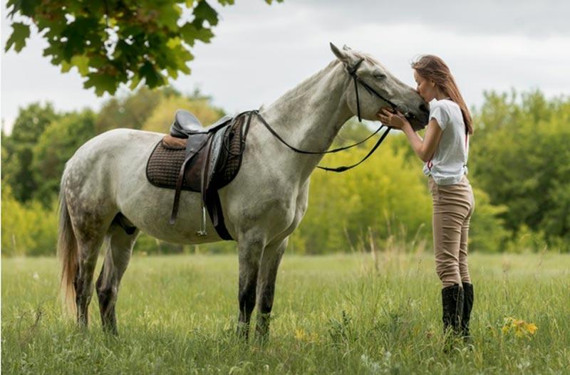pólizas de seguros para caballos
